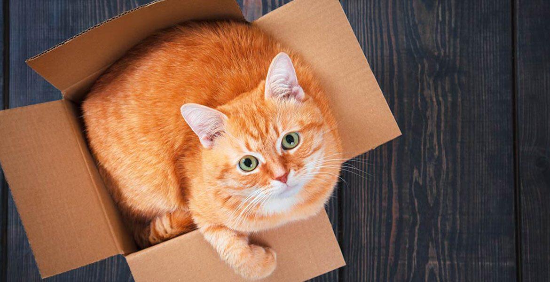 преместване на дома с котка заглаавие 1