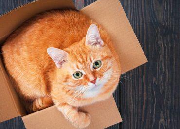 Преместване на дома с котка