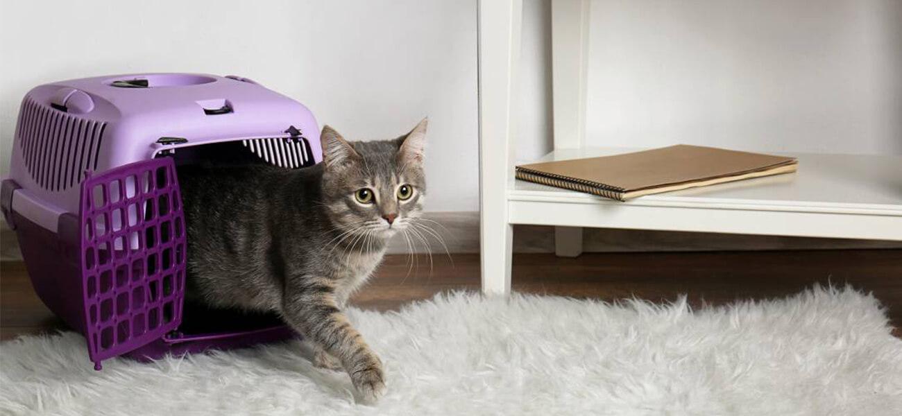 преместване на дома с котка 2
