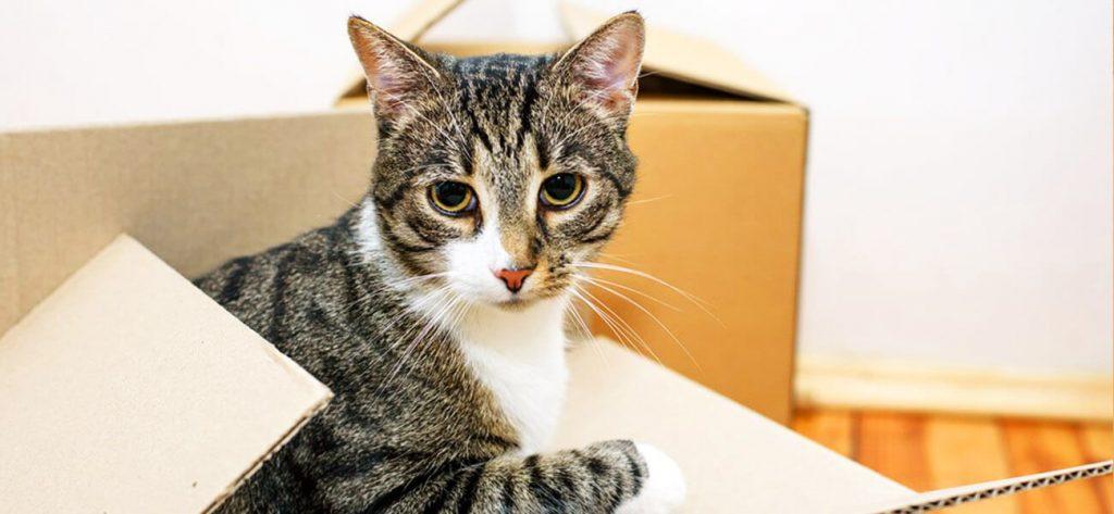 преместване на дома с котка изображение 4
