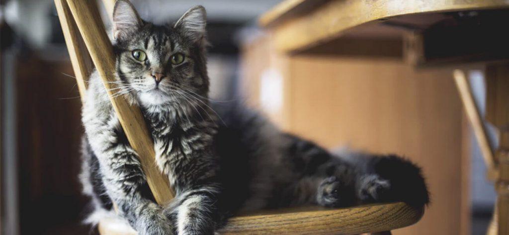 преместване на дома с котка 9