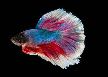 Преместване на аквариум