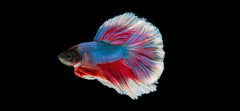 преместване на аквариум заглавна снимка
