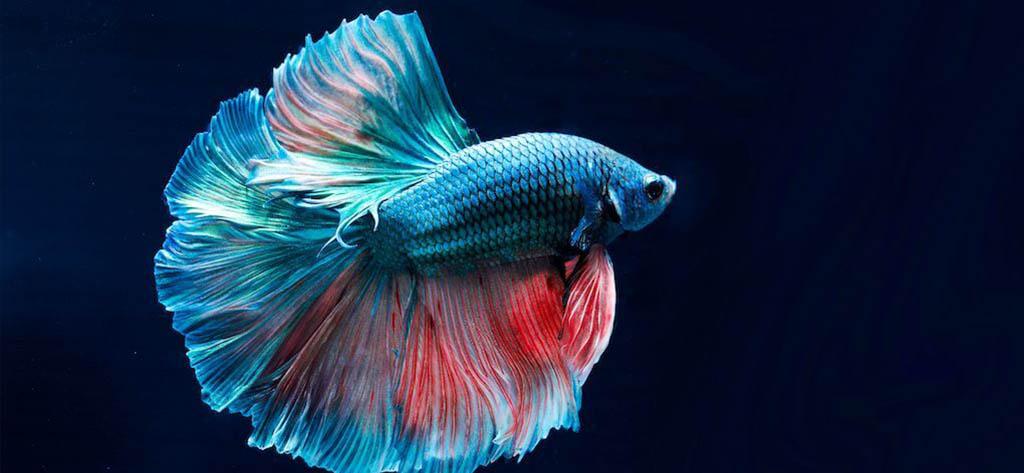 преместване на аквариум снимка 8